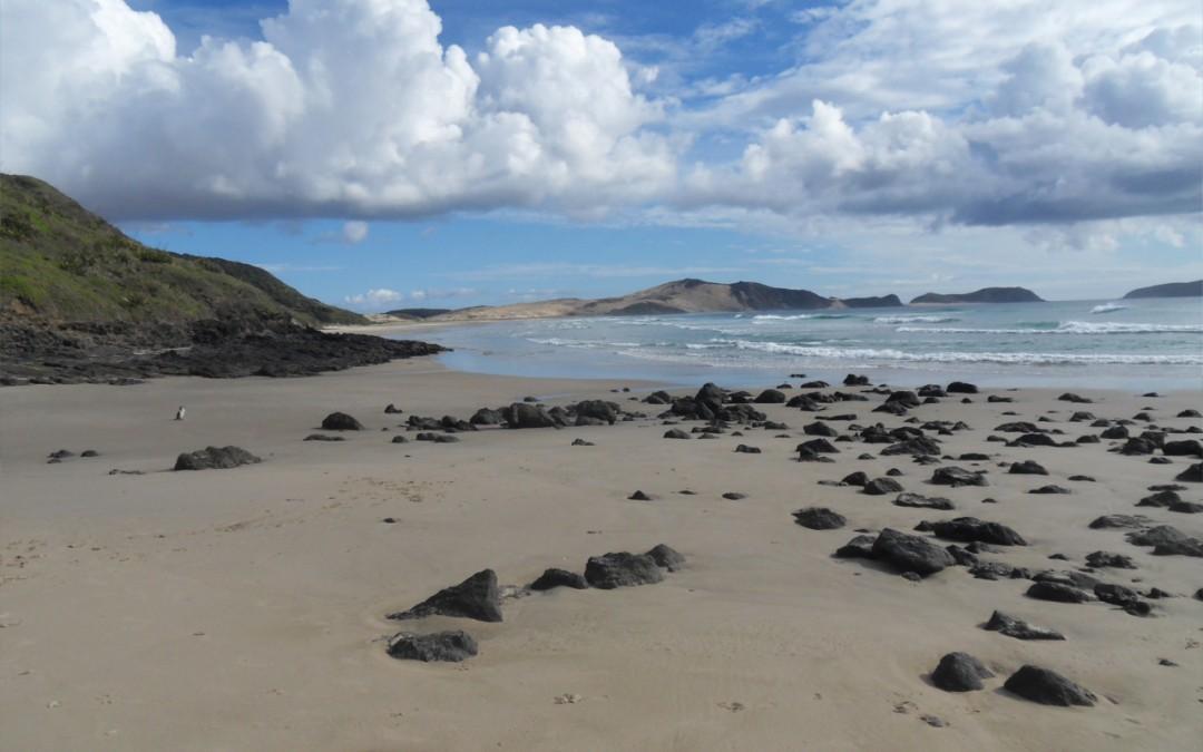 Geschützt: Cape Reinga – Strand