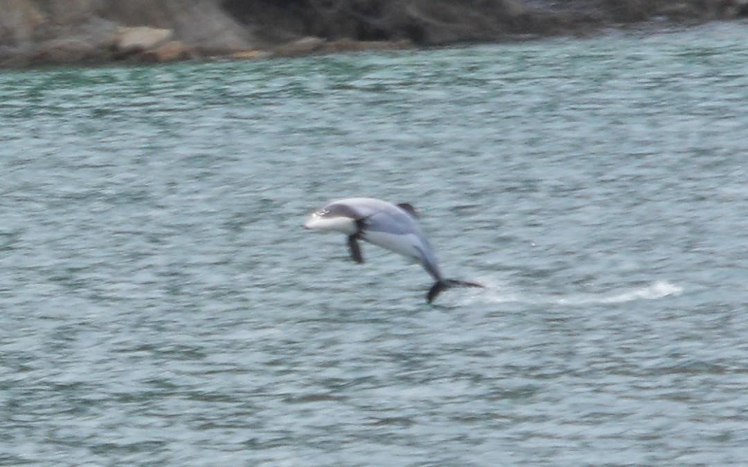 Geschützt: Picton – Schwimmen mit Delfinen
