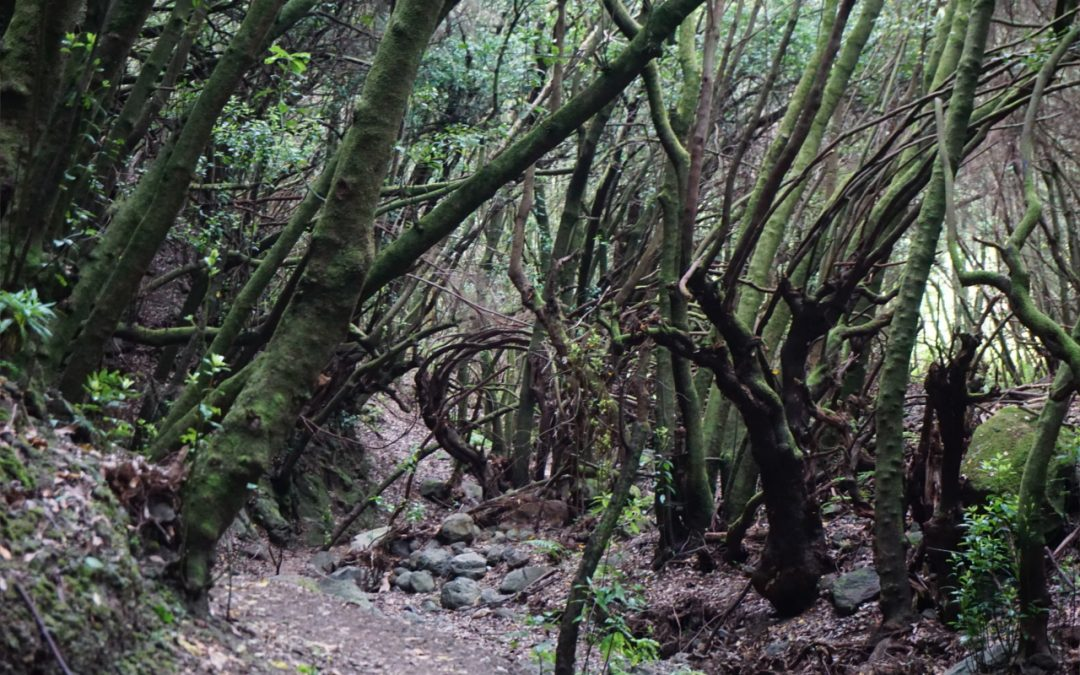 La Palma – Urwald Barrancos – Letterbox (Testlauf)